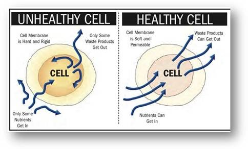Blog-Article-Cell-Image Learn how the benefits of Kangen keep the cells in your body healthy!